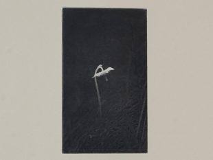 Detail of a small single-flower plant against a black background within a beige mount
